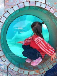 水族館でお散歩の写真・画像素材[2791498]