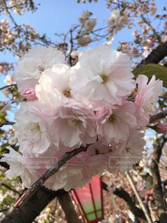 花の写真・画像素材[554380]