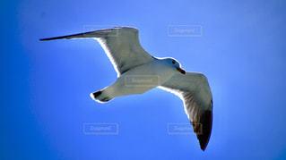 空を飛ぶ鳥の写真・画像素材[2538066]