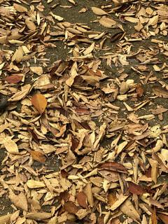 落ち葉がいっぱい。の写真・画像素材[3856135]