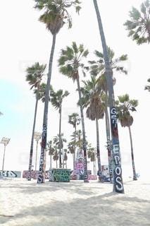 ベニスビーチのヤシの木の写真・画像素材[2544296]