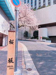 桜坂の写真・画像素材[2564050]