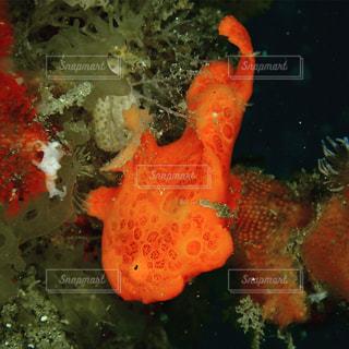 水の下を泳ぐ魚の写真・画像素材[2530737]