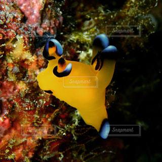 海の中のピカチュウの写真・画像素材[2530779]