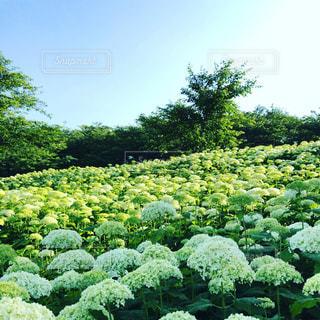 花の写真・画像素材[594563]
