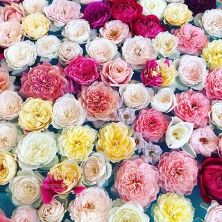 花のクローズアップの写真・画像素材[2553189]