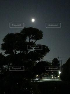 暗闇の中の木の写真・画像素材[3416562]