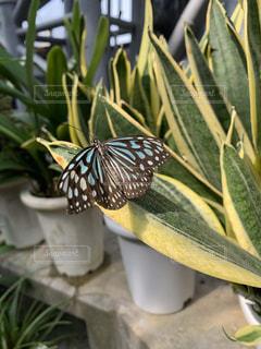 植物のクローズアップの写真・画像素材[2535005]