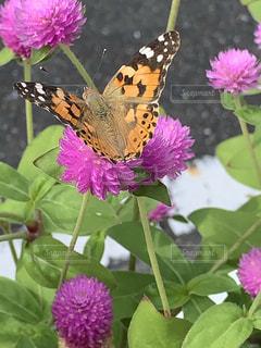 花と蝶の写真・画像素材[2539189]