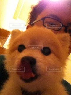 犬の写真・画像素材[98474]
