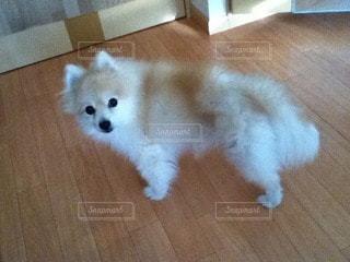 犬の写真・画像素材[98478]