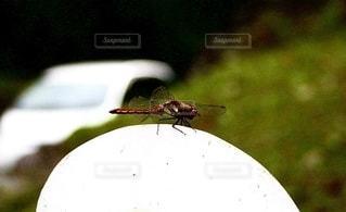 秋、赤トンボの写真・画像素材[2551783]