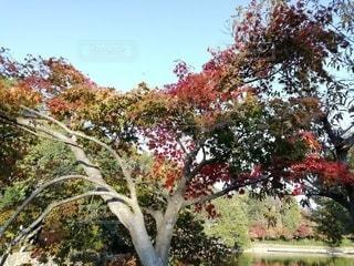 木の前の花畑のクローズアップの写真・画像素材[2533776]