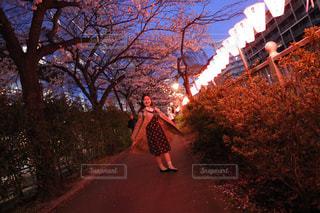 夜桜のなかでの写真・画像素材[2548662]