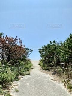 浜辺に続く道の写真・画像素材[2537778]