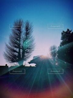 木々を照らす太陽の写真・画像素材[2555683]