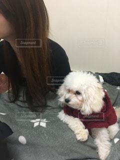 社長犬、テレビの内容に興味を持つの写真・画像素材[2881747]