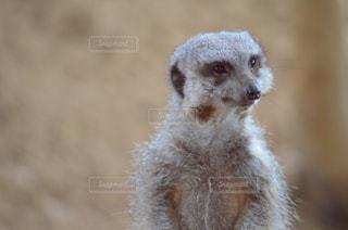 動物のクローズアップの写真・画像素材[2540976]