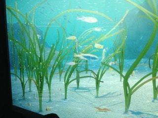 海の写真・画像素材[100696]