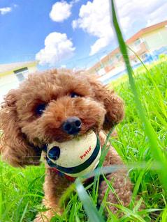 草の上に座っている犬の写真・画像素材[2546261]