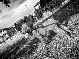 モノクロの写真・画像素材[2704079]