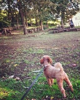 草の中に立っている熊の写真・画像素材[2716768]