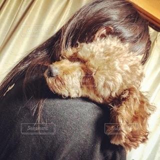 ネクタイを締めている犬の写真・画像素材[2743882]