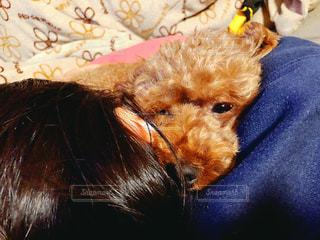 ベッドに座っている犬の写真・画像素材[2917784]