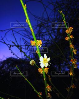 テーブルの上に花の花瓶の写真・画像素材[3050841]