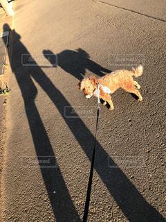 道路の脇を歩いている犬の写真・画像素材[3055684]