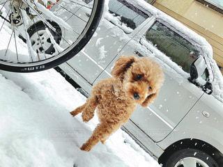 雪の中に座っている犬の写真・画像素材[3061622]