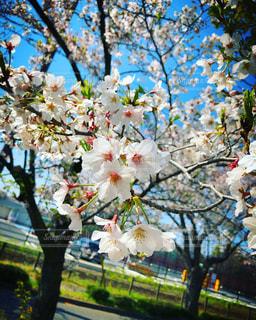 木に花の花瓶の写真・画像素材[3073472]
