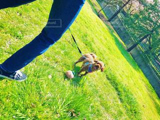 草の中に立っている人の写真・画像素材[3073712]