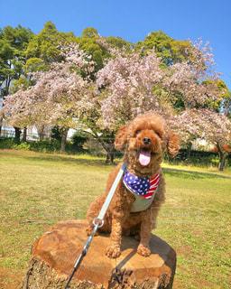 草の中に立っている犬の写真・画像素材[3076476]