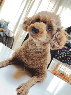 衣装を着た犬の写真・画像素材[3098788]