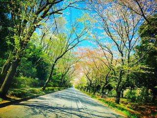 公園の木の写真・画像素材[3098980]