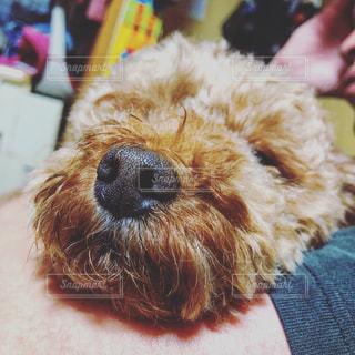 犬のクローズアップの写真・画像素材[3118679]