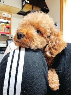 ネクタイをしている犬の写真・画像素材[3122391]