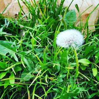 庭の緑の植物の写真・画像素材[3124620]