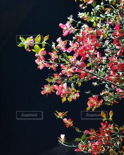 テーブルの上に花の花瓶の写真・画像素材[3127974]