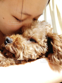 犬のクローズアップの写真・画像素材[3199597]
