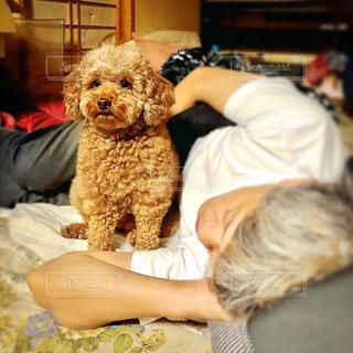犬を抱いている人の写真・画像素材[3233512]