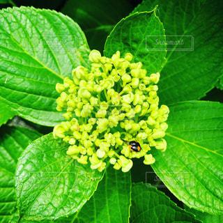 緑の植物の写真・画像素材[3255642]