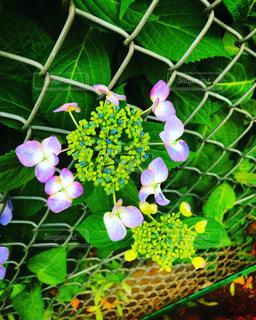 花園のクローズアップの写真・画像素材[3272885]