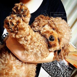 衣装を着た犬の写真・画像素材[3292862]