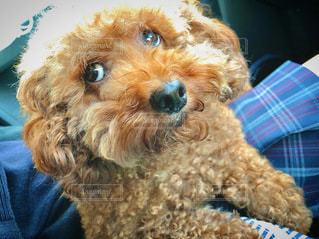 犬のクローズアップの写真・画像素材[3357320]