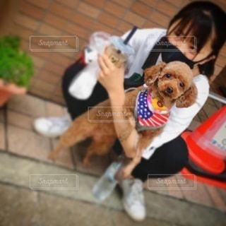 犬を抱いている人の写真・画像素材[3371679]