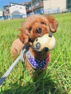 草の中に座っている犬の写真・画像素材[3380790]