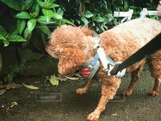 庭の犬の写真・画像素材[3401686]
