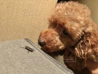 犬の隣に座っている小さな茶色のテディベアの写真・画像素材[3474759]